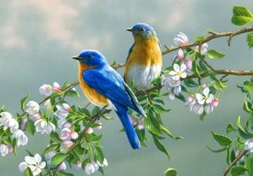 Resultado de imagen de pajaros primavera